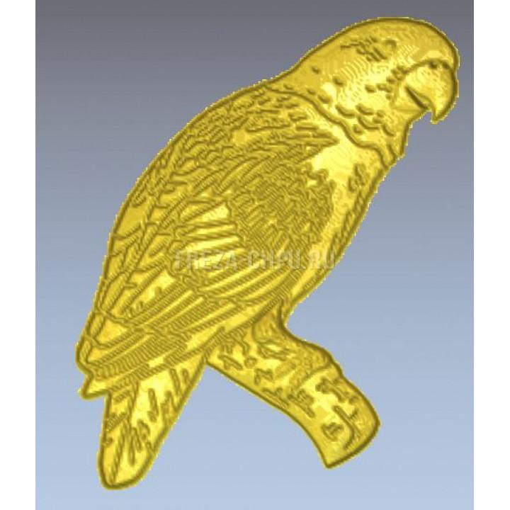 Попугай Parrot_010