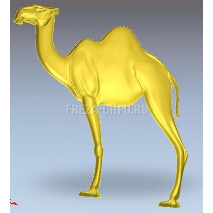 Верблюд Camel_015